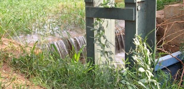 الحشائش التي تنبت بصورة عشوائية في المناطق الزراعية تعطل عمل البوابات الموجودة بالجداول الرئيسية لتوزيع المياه في مشروع الجزيرة.
