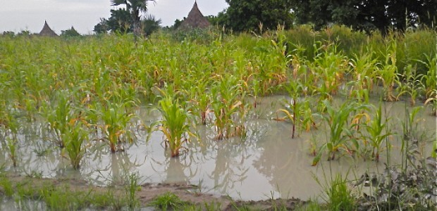 A flooded farm in South Sudan's Unity State, August 18, 2012.