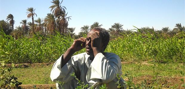 مزارع في دنقلا، مدينة تقع في الاقليم النوبي السوداني، 2011.