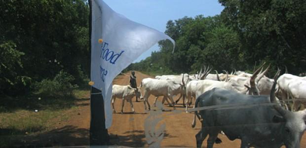 يملك جنوب السودان بسكانه الأحد عشر مليوناً نحو 11.7 مليون بقرة و12.4 مليون رأساً من الماعز و12.1 مليوناً من الأغنام، لكن ذلك ليس لفوائدها من حيث الأمن الغذائي بل بسبب الثروة التي تمثلها في نفسها. طريق قرب رمبيك، ولاية البحيرات، 5 أكتوبر 2011.