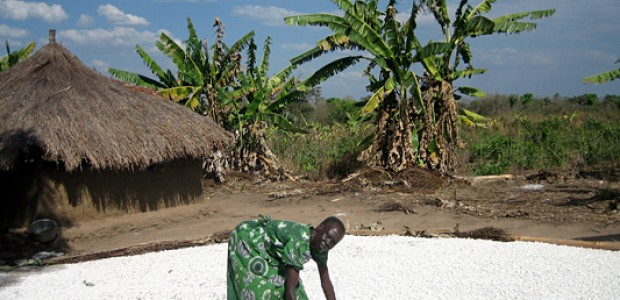 Cassava drying out in the sun, Yei, January 25, 2006.