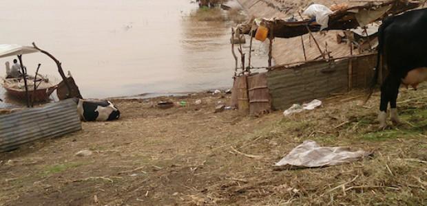 مزرعة عبد الحميد عبد الباقي بعد أن غمرتها المياه، 17 أغسطس.