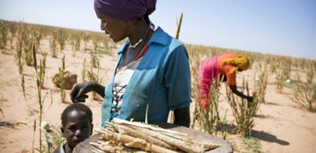 الزراعة بالقرب من الفاشر، شمال دارفور
