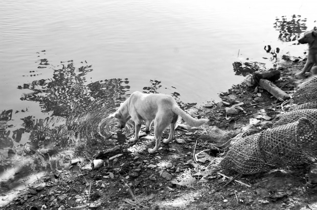 People and animals alike enjoy and depend on the Nile.