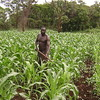 A farmer in Magwi cultivating maize (21.04.2012).