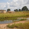 A flooded homestead in South Sudan's Northern Bahr El-Ghazal State, September 2012.