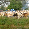 A cattle camp in Lakes State, South Sudan.