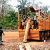 A truck is loaded with timber, cut in a forrest in Western Equatoria State's Yambio, February 10.