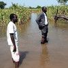 Warrap State's Minister for Agriculture, Majok Bol Kur assessing floods in Tonj North County in 2013.