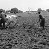 A couple in Thiet, Tonj State, South Sudan, plough their field.