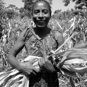 A woman collecting dried maize leaves for livestock feed on a khat field partially intercropped with maize in Wondo village, Ethiopia. (photo: The Niles | Tesfa-Alem Tekle)