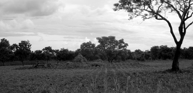 A maize field owned by the Yeyejita Farmers Group in Yei on May 11, 2016.				 (photo: The Niles | Alison Lemeri)