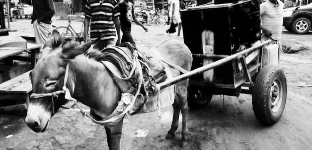 Call a donkey! Water business in Yambio. (photo: The Niles | Joseph Nashion)