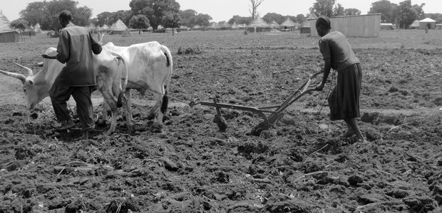 A couple in Thiet, Tonj State, South Sudan, plough their field. (photo: The Niles | Ayuel Santino)